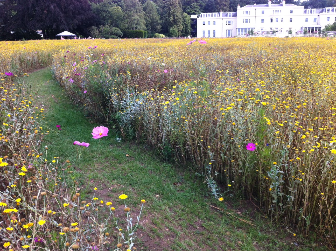 Meadow at Coworth Park