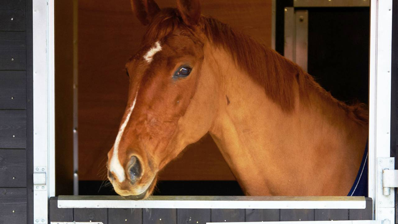 Equestrian at Four Seasons
