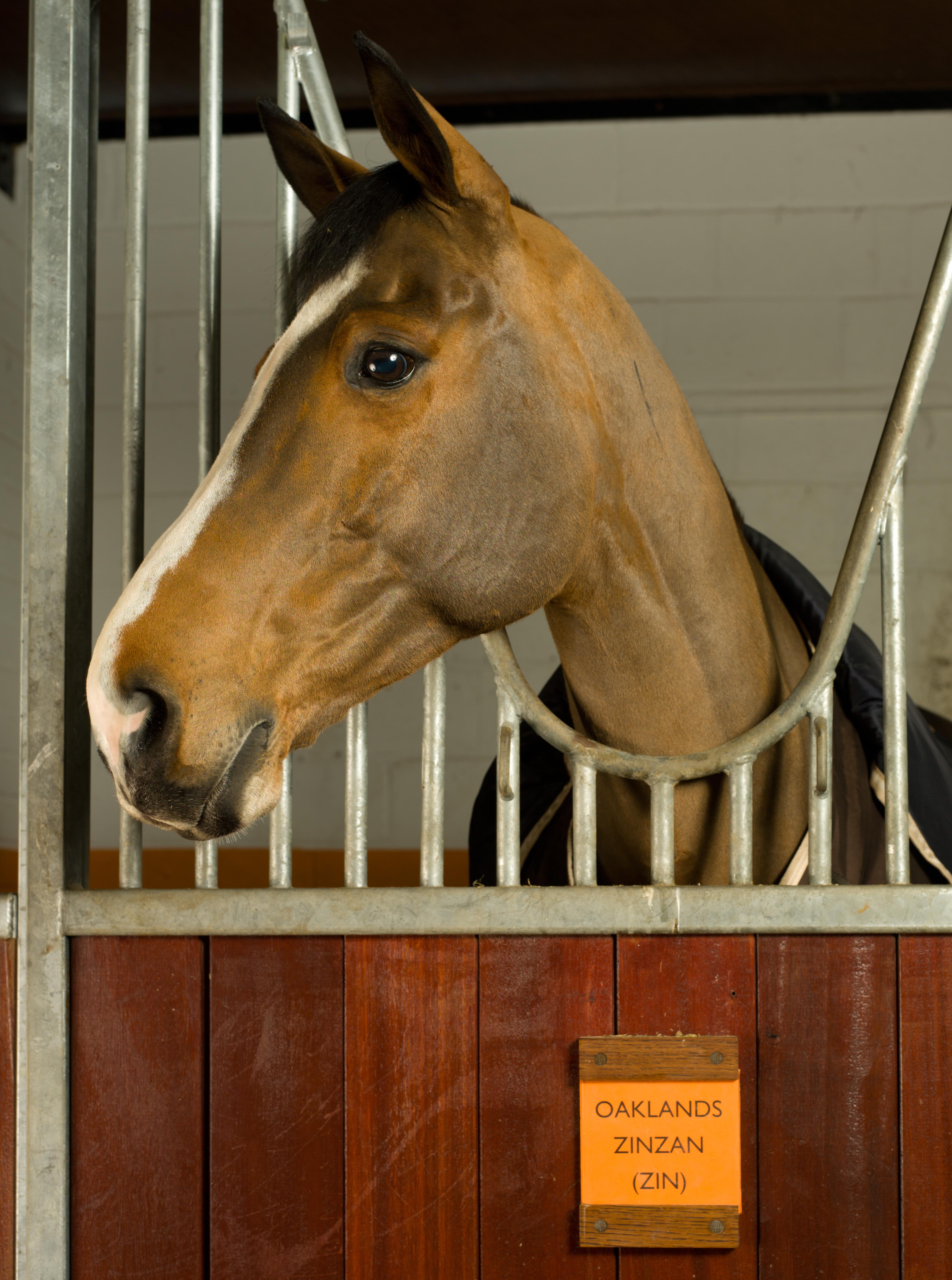 Equestrian at Coworth Park 2