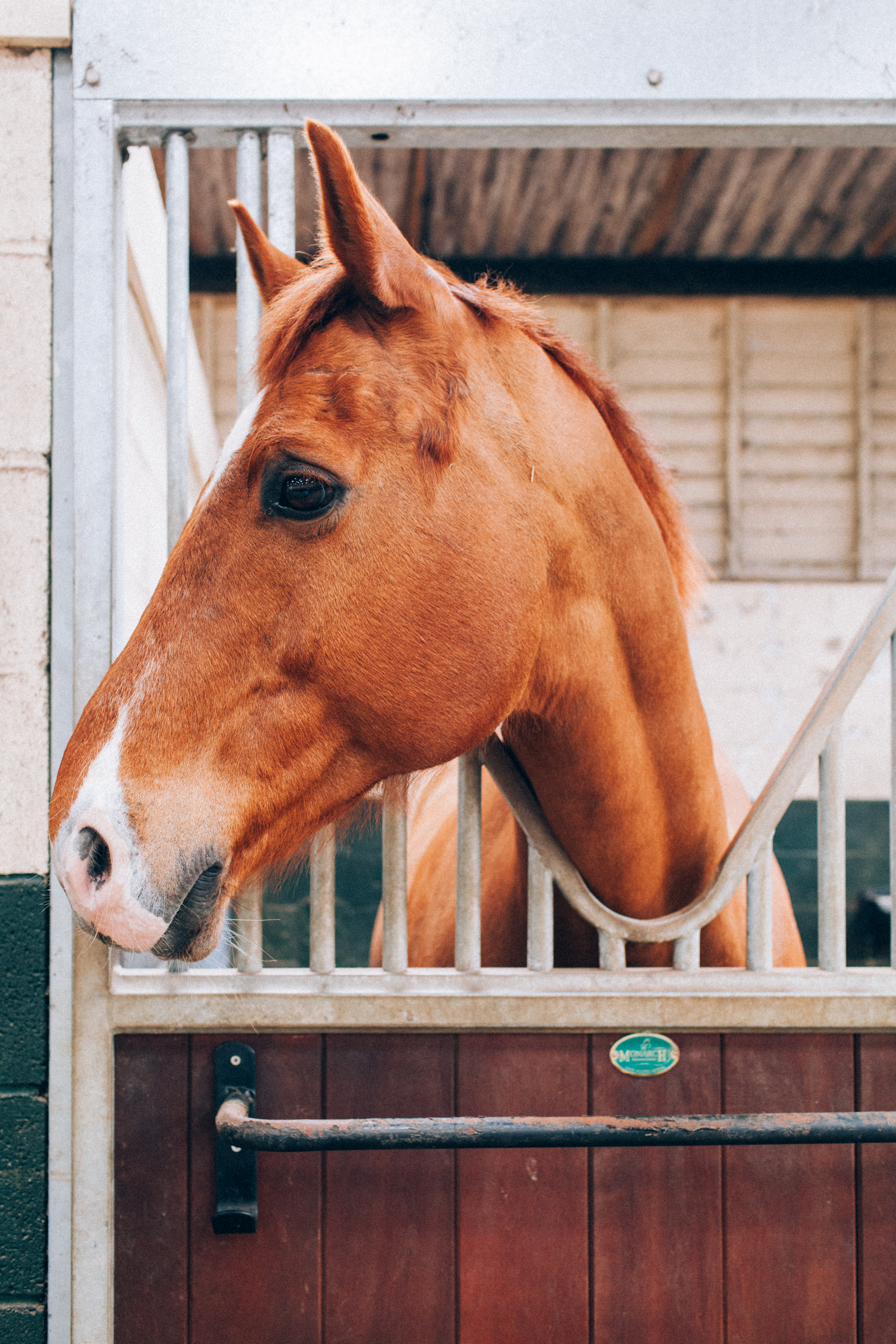 Lucknam Equestrian Centre
