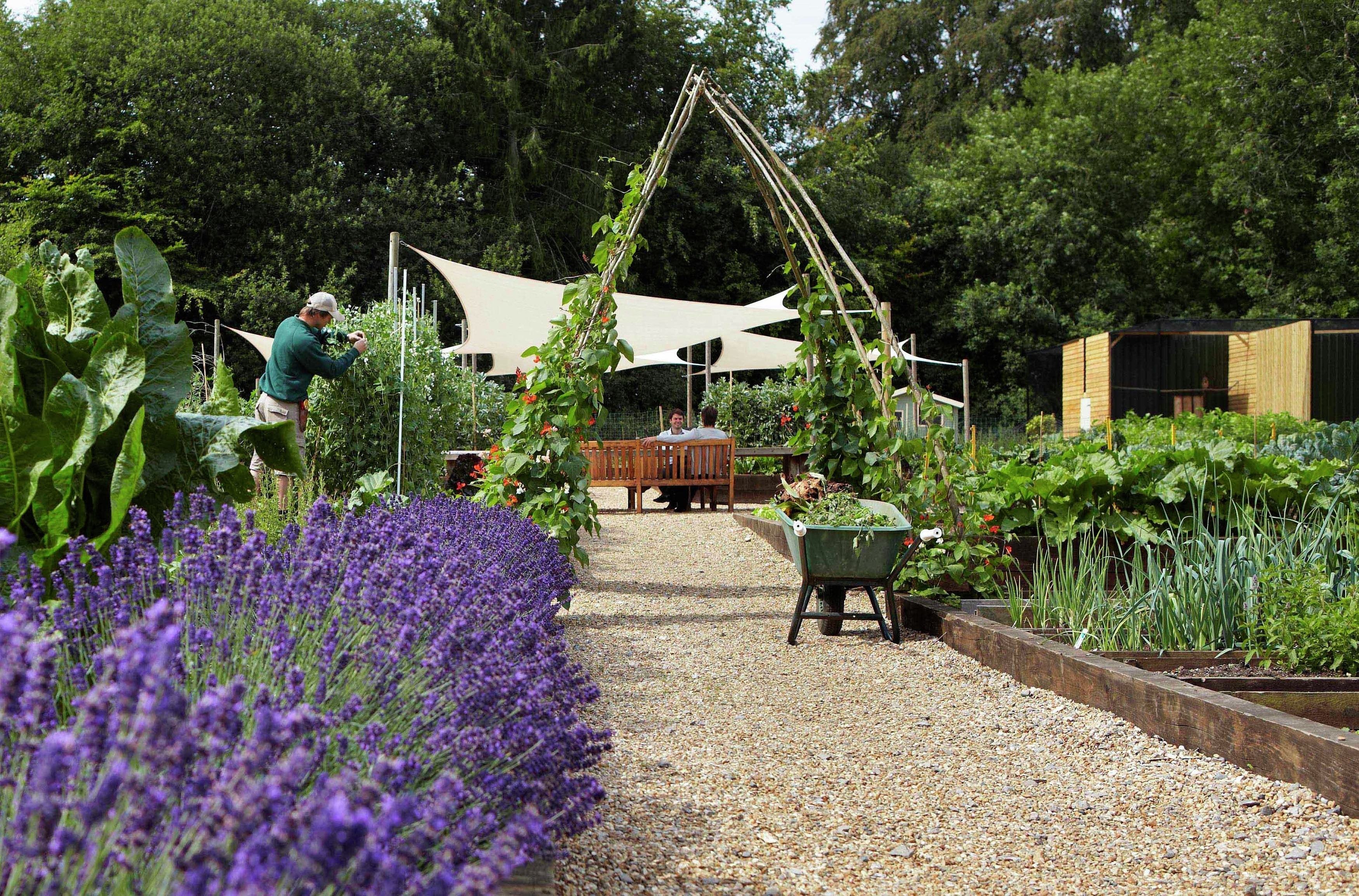 lainston kitchen garden 2